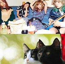 SCANDAL×映画『猫なんかよんでもこない。』 (C)2015杉作・実業之日本社/「猫なんかよんでもこない。」製作委員会
