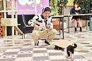《企画①》猫かわいい動画を撮ろう!©テレビ大阪